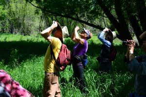 Annual DLC Memorial Day Birding Hike @ DuPont Open Space